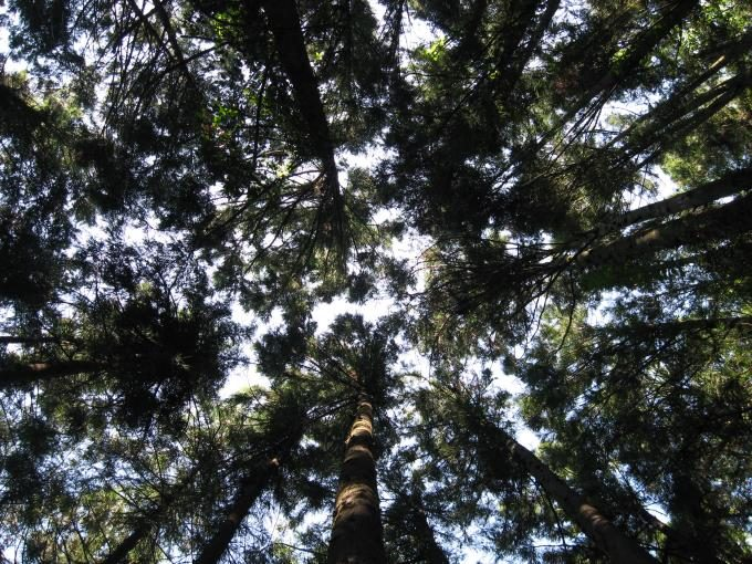 上を見上げると空を樹木で覆われて良く見えません。