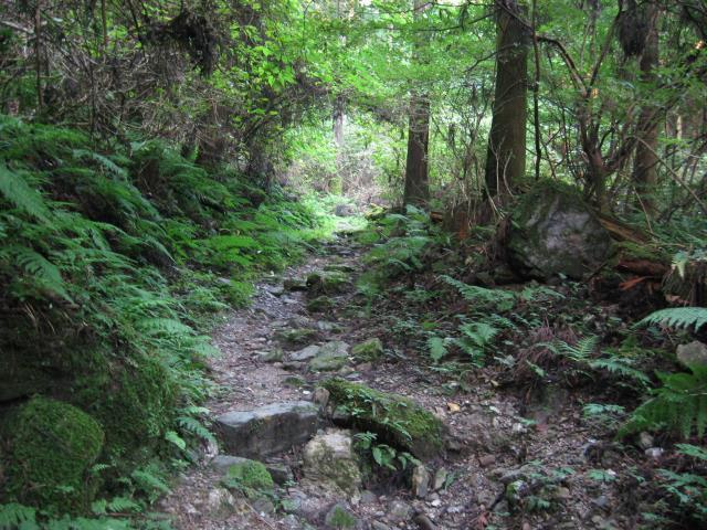 傘杉峠への登山道の様子
