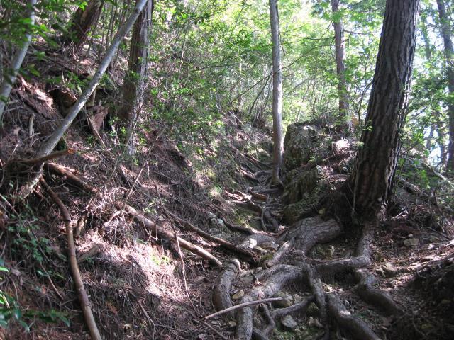 登山道の様子(はじめは急な登り坂)