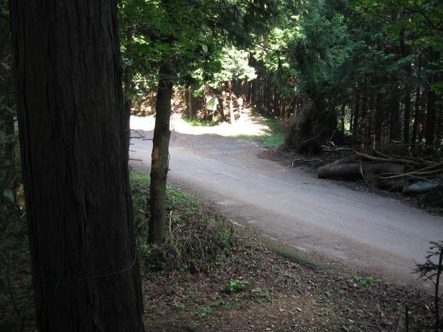 登山道が車道と合流(車道の向かい側に再び森の中に入る入口あり)