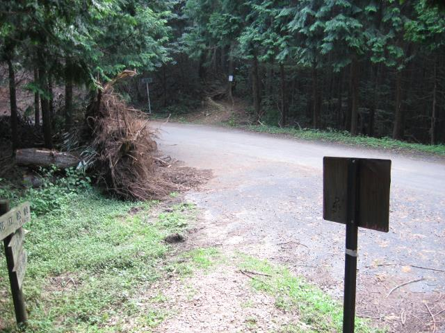 花立松峠から森の中へ入り、再び車道を横断し森の中へ