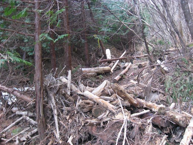 流木が積み重なった登山道