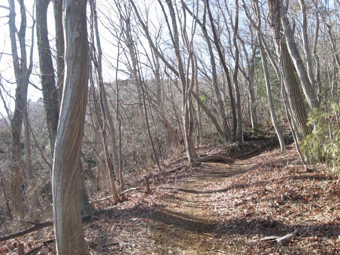 明るい尾根の登山道