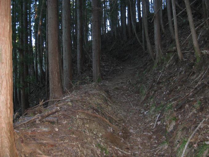 杉林の中の登山道