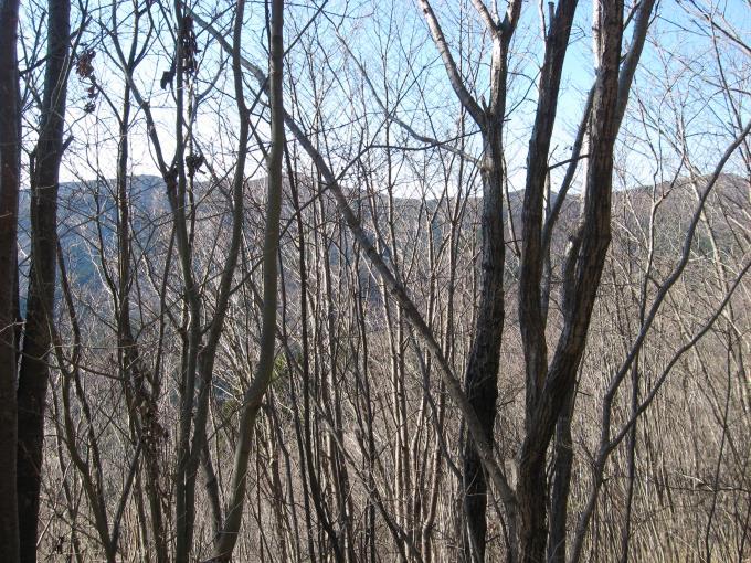樹林の間から見える向かいの尾根