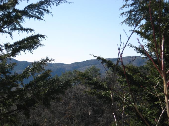 木の間から見える展望
