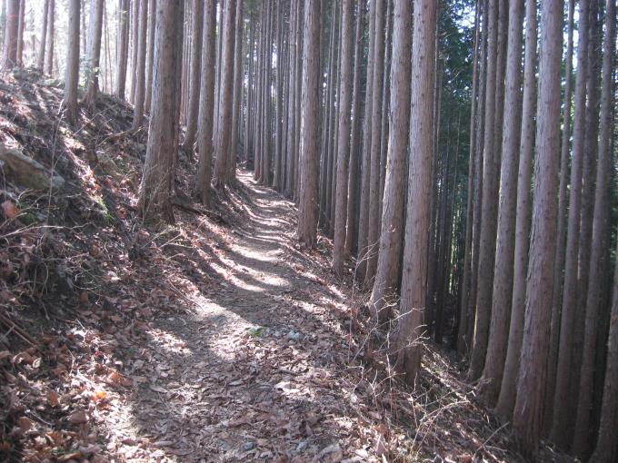 藤倉バス停分岐の先の登山道