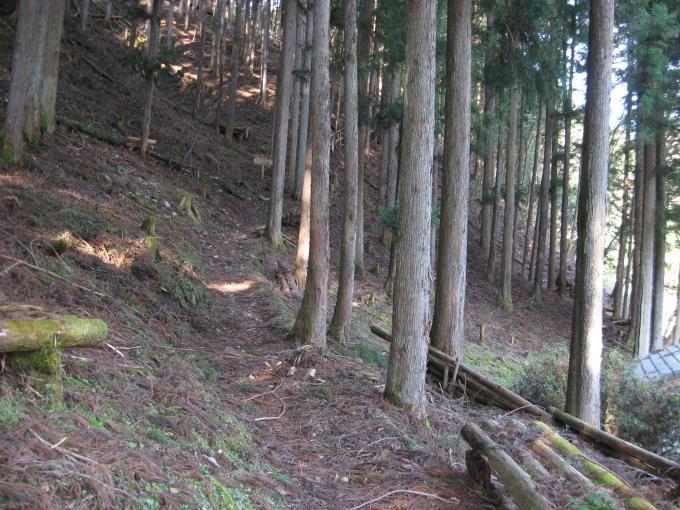 中央区の森の登山道