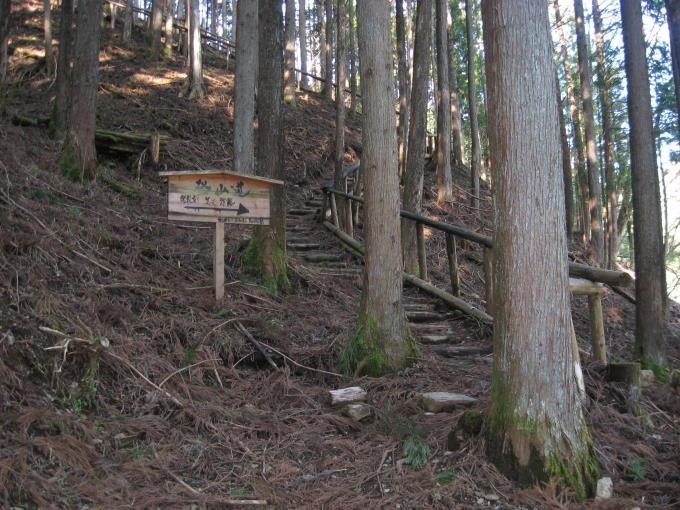 中央区の森にある階段