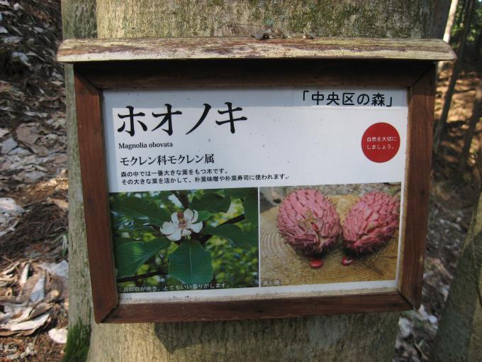 樹木の解説板