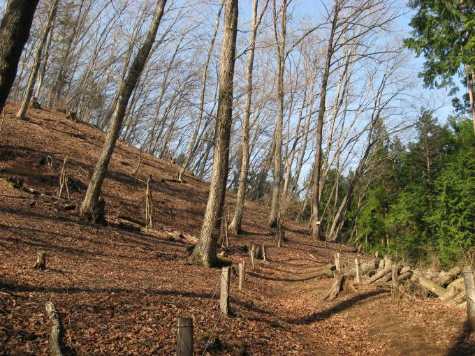 カタクリ植栽地付近の登山道の様子