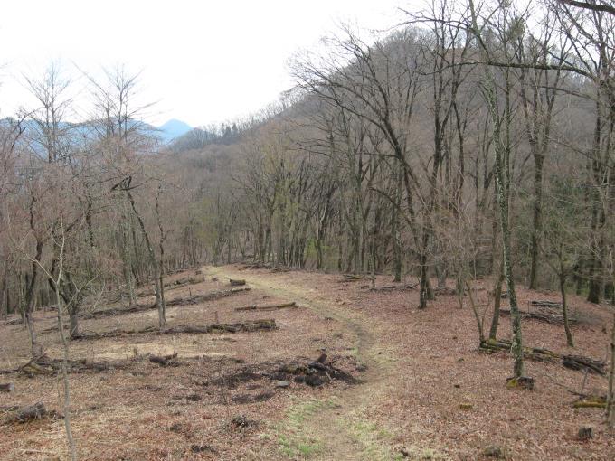 松生山への登山道