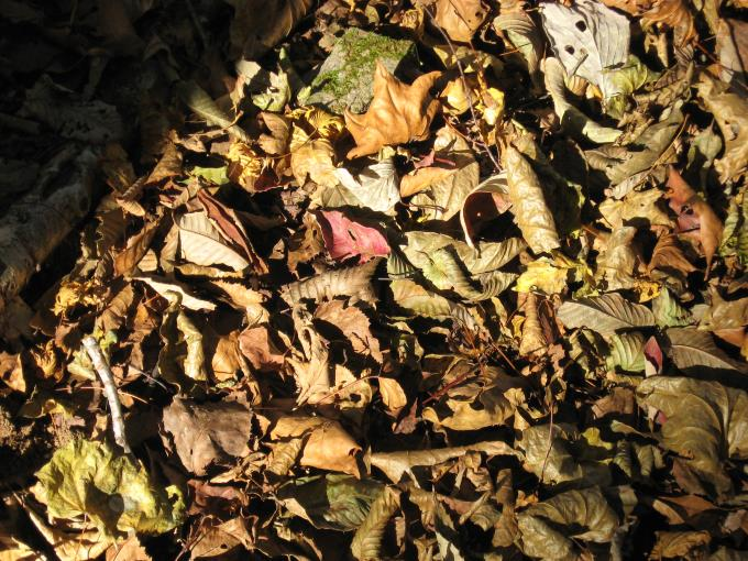 登山道を埋め尽くす落葉