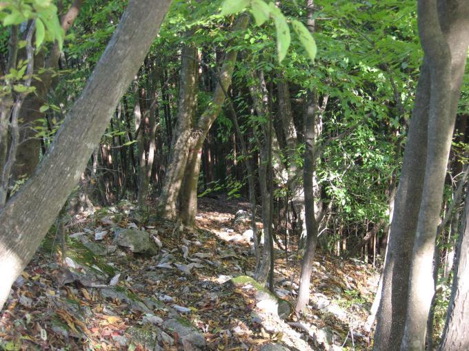道が不明瞭な登山道