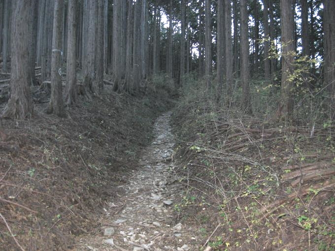 祠の先の登山道