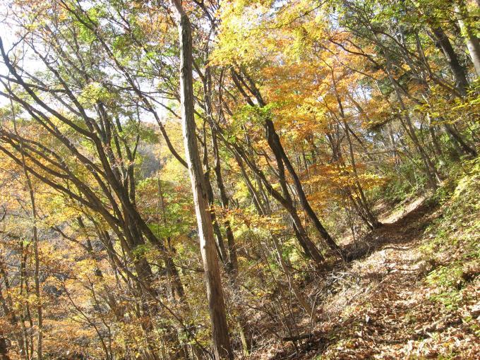 明るい自然林の登山道