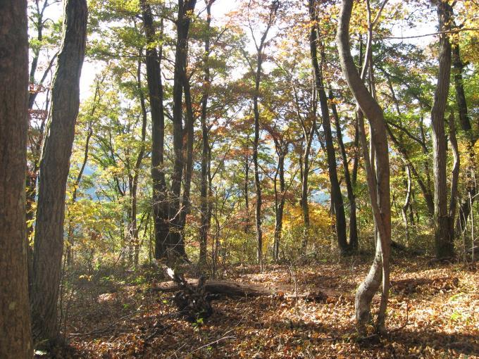 自然林の中を歩く登山道