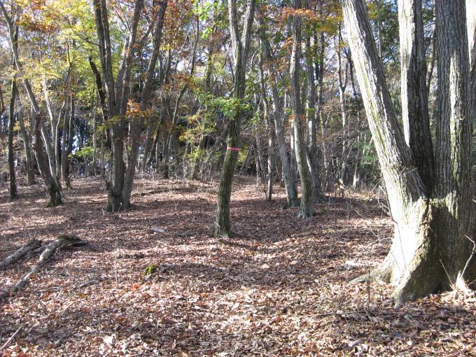 落葉で踏み跡が消えた登山道