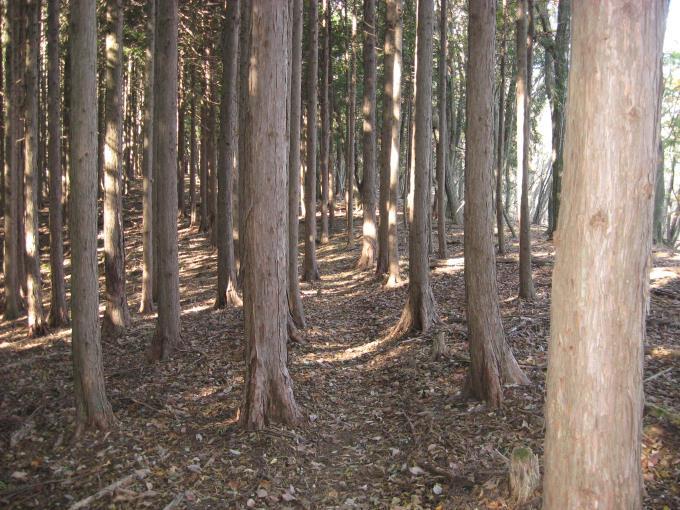 植林帯の中の登山道
