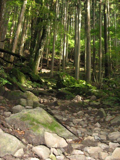 深い森の中の登山道