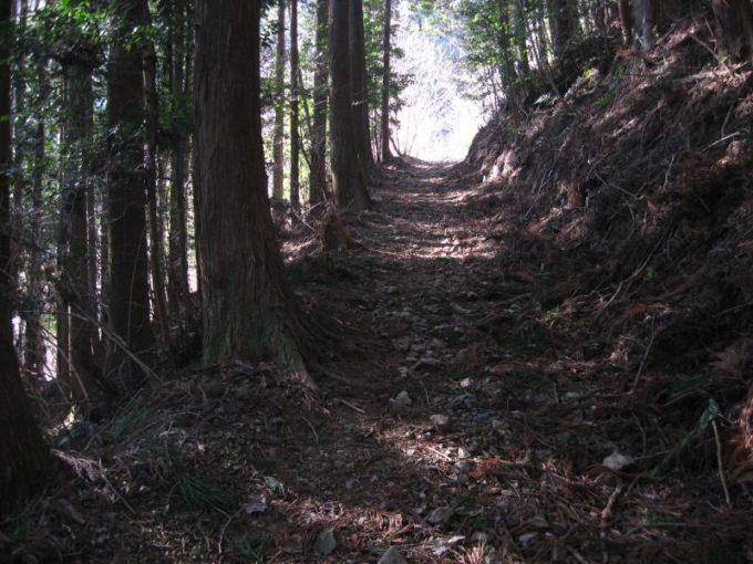 深い森の中の登山道の様子