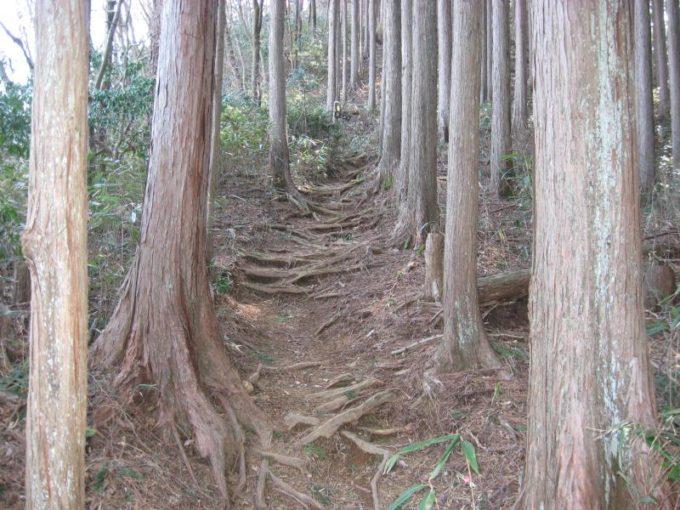 花立松ノ峠から傘杉峠への登山道の様子