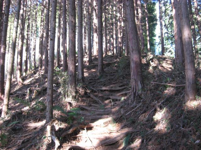 木の根の多い登山道