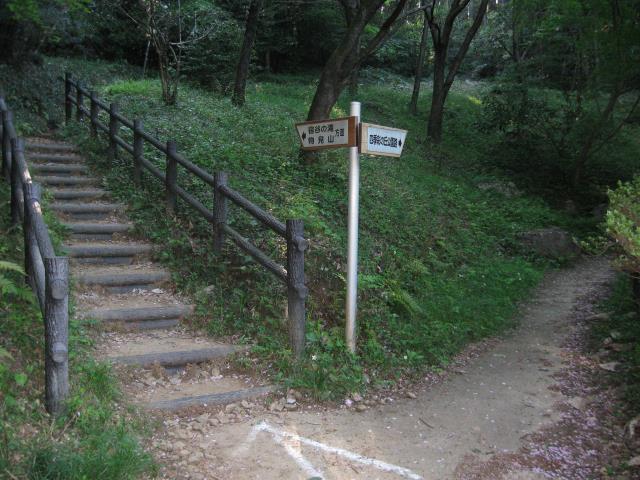 道が左右に分岐する