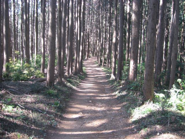 北向地蔵への登山道