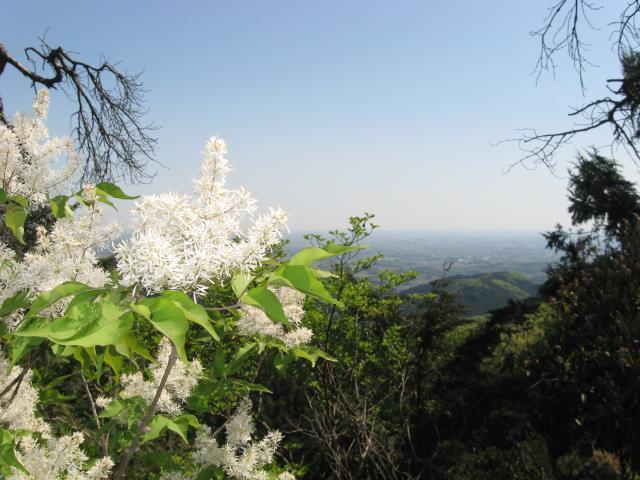 観音ケ岳からの眺め