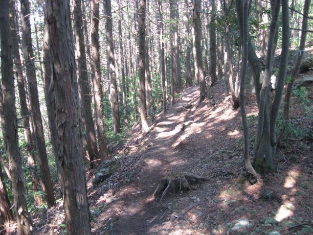 スカリ山から鎌北湖への登山道