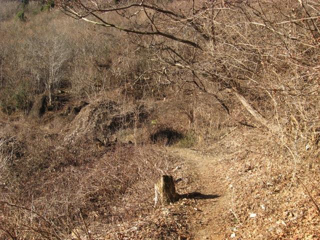 日照水から花立松峠への登山道の様子