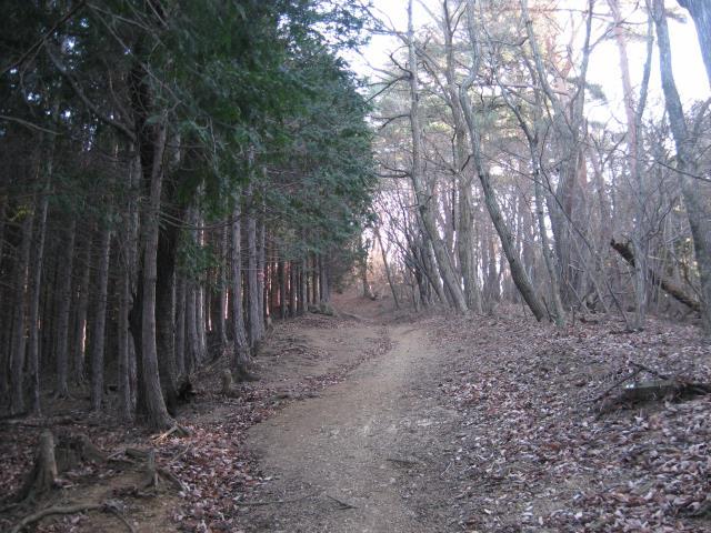 1月の登山道は寒々しい。