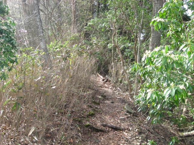 登山口付近の登山道の様子