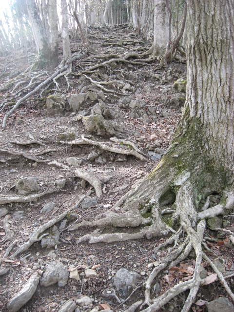 木の根が張り出した急斜面の登山道