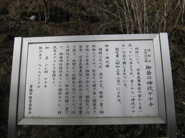 神代ケヤキの解説板
