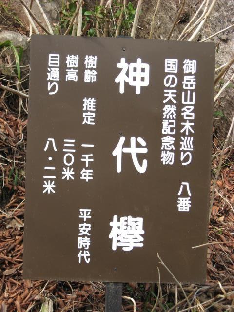 神代欅の看板