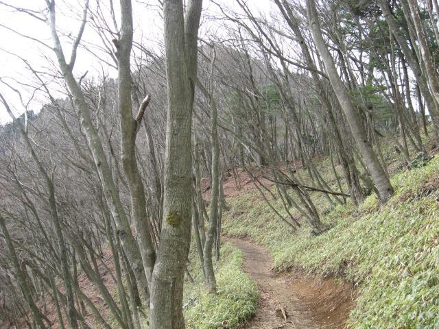 大岳山と上高岩山の間の登山道の様子