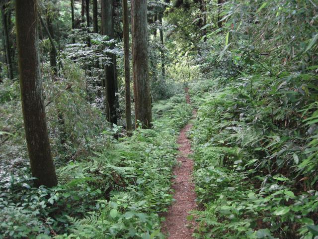 6月の登山道の様子(下草が成長し出している)