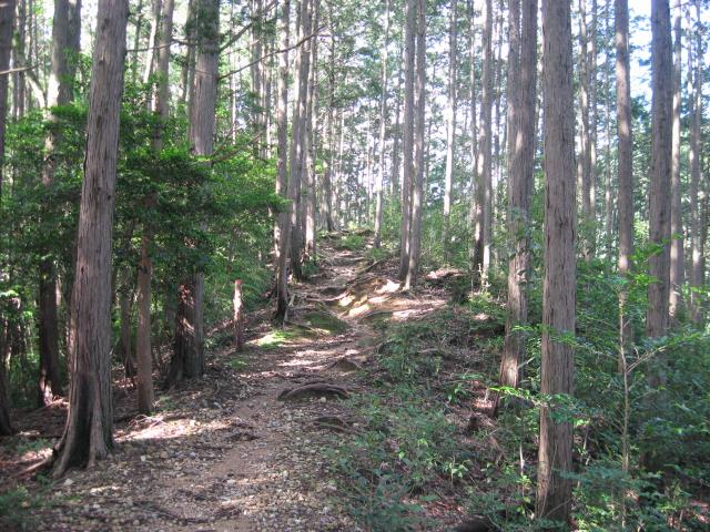 ヤセオネ峠から先は森の中へ入る