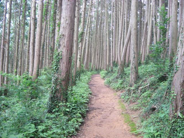 物見山から北向地蔵への登山道は歩きやすい