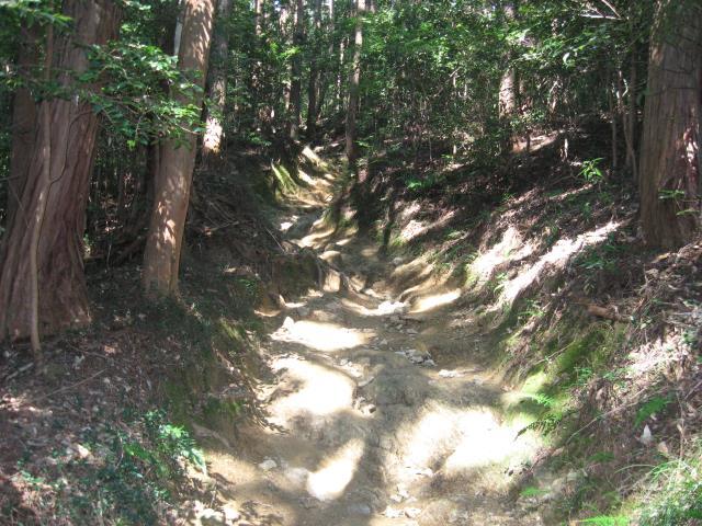 物見山への登山道の様子